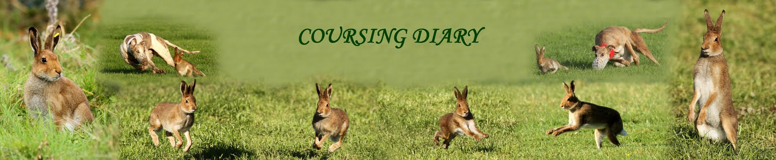 COURSING DIARY
