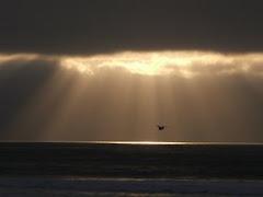 dark sea shimmers
