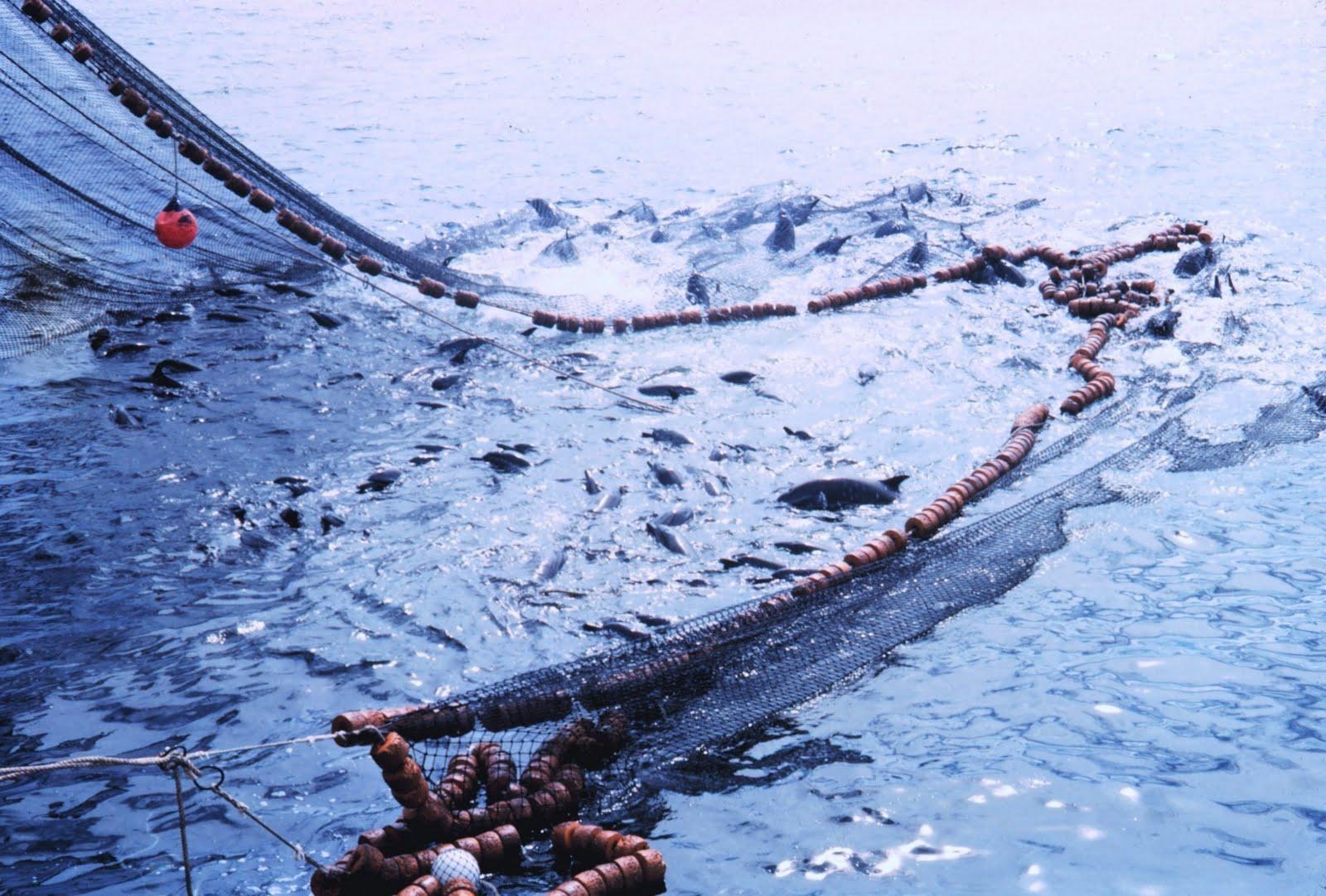 Fishing drop the harmful fishing method for Tuna fishing video