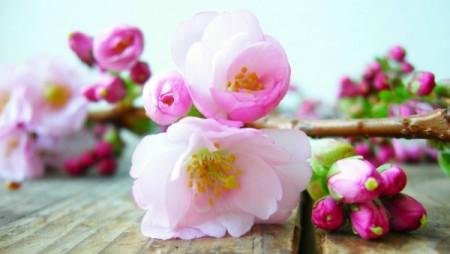 Поэзия, вкусы и ароматы