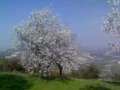 Spring Time '09
