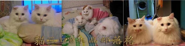 貓三口打躉@水晶部落格