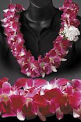 Hawaiian Lei Greetings