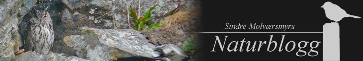 Sindre Molværsmyrs Naturblogg