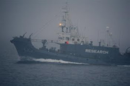 CHASSE A LA BALEINE DANS L'OCEAN AUSTRAL: GREENPEACE REPOUSSE LES BALENIERS JAPONAIS