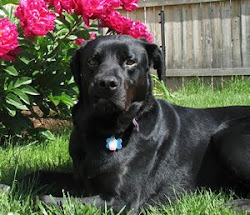 Angus The Dog