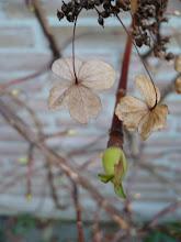 Eerste tekenen van lente