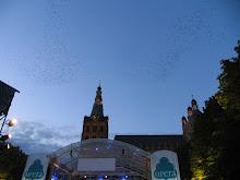 Vogelballet boven Sint Jan