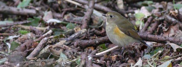 François Doyen's Birding Blog