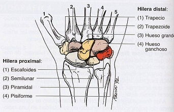 Ejercicios flexor largo de los dedos - sandranewscom