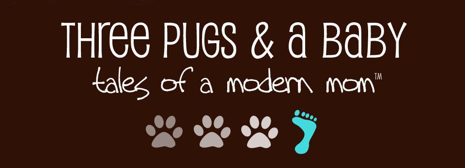 three pugs & a baby