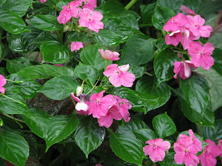 Hoe and shovel florida 39 s steamy hot summer blooms gbbd august - Flowers that bloom all year round ...