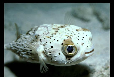 Funny Looking Smiling Fish