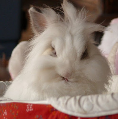 ugly-rabbit.jpg