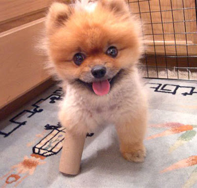 Fluffy Dogs That Stay Small http://www.sodahead.com/fun/what-kind-of-dog-do-u-own/question-1708717/
