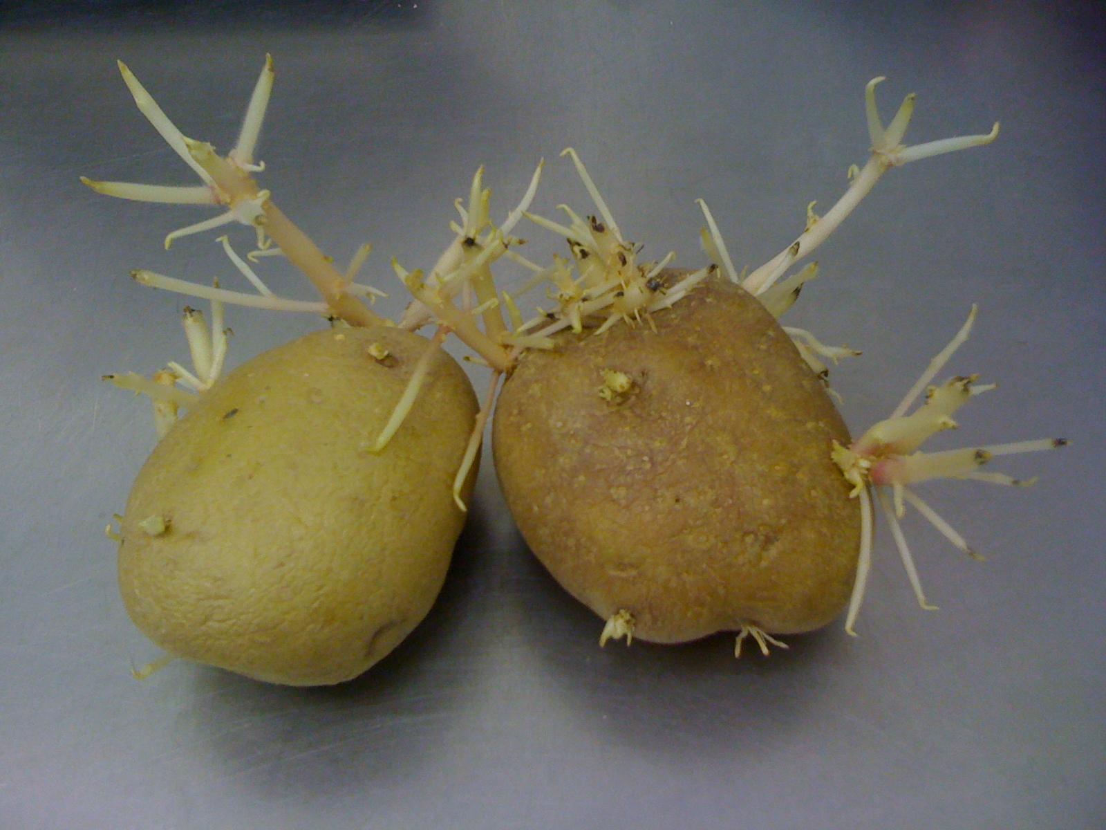картошка с солью для суставов