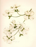 North Carolina Dogwood