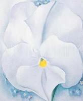 White Pansey