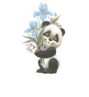 Panda ecg