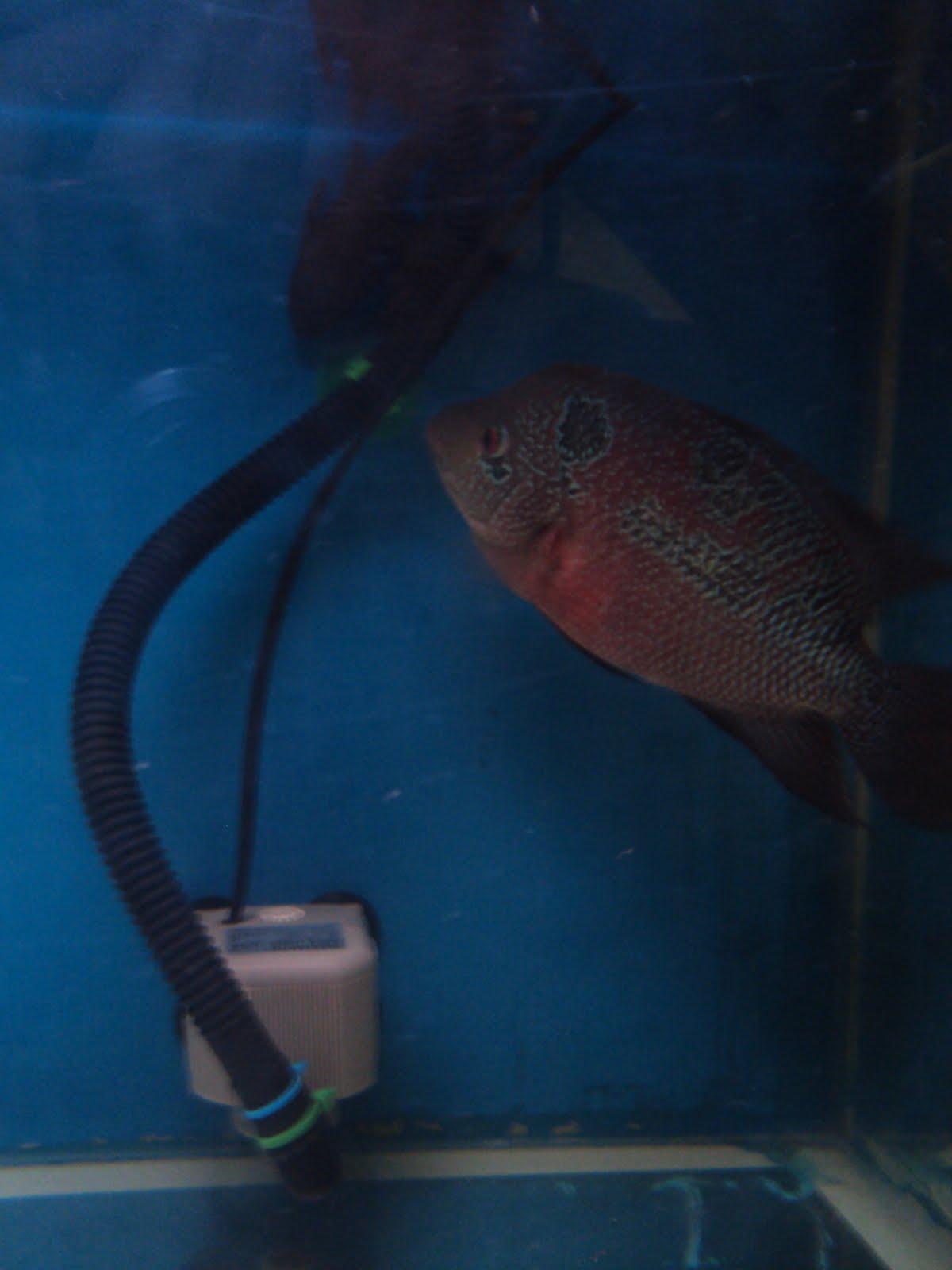 Fish Tank got picked!