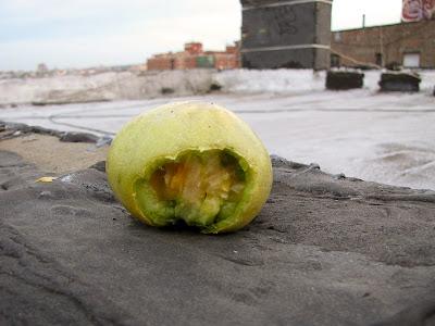 Rooftop Container Garden Pest