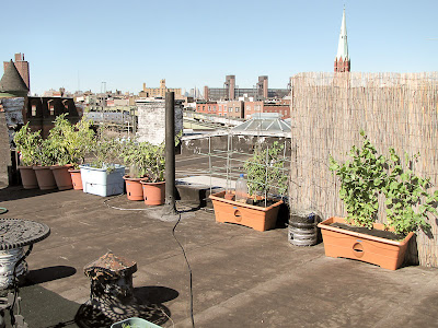Bushwick Rooftop Container Vegetable Garden Plant
