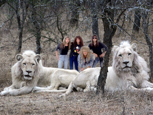 greatest bands wallpapers white lion. Black Bedroom Furniture Sets. Home Design Ideas