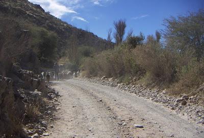 goats route 40 Cachi