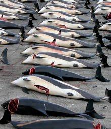¡Salvarnos con las ballenas!