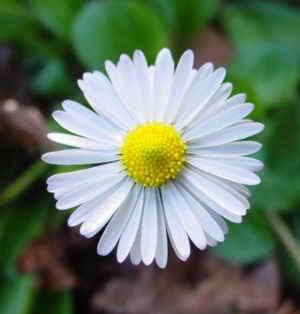 http://1.bp.blogspot.com/_JpbZjqaoBEA/SKxxylPgEBI/AAAAAAAAGFI/T5Tpw1vxHPQ/s400/Margarida_01eue.jpg