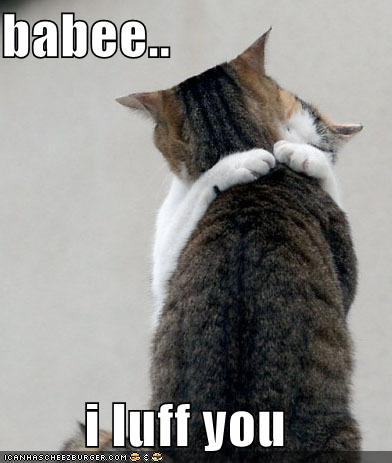 lolcats funny picture baby i love you