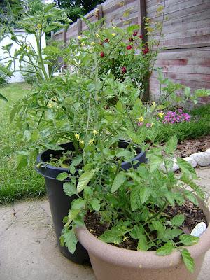 Audreypawdrey june 2009 - Lasagna gardening in containers ...