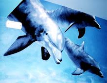 Los delfines son tiburones con buena prensa.