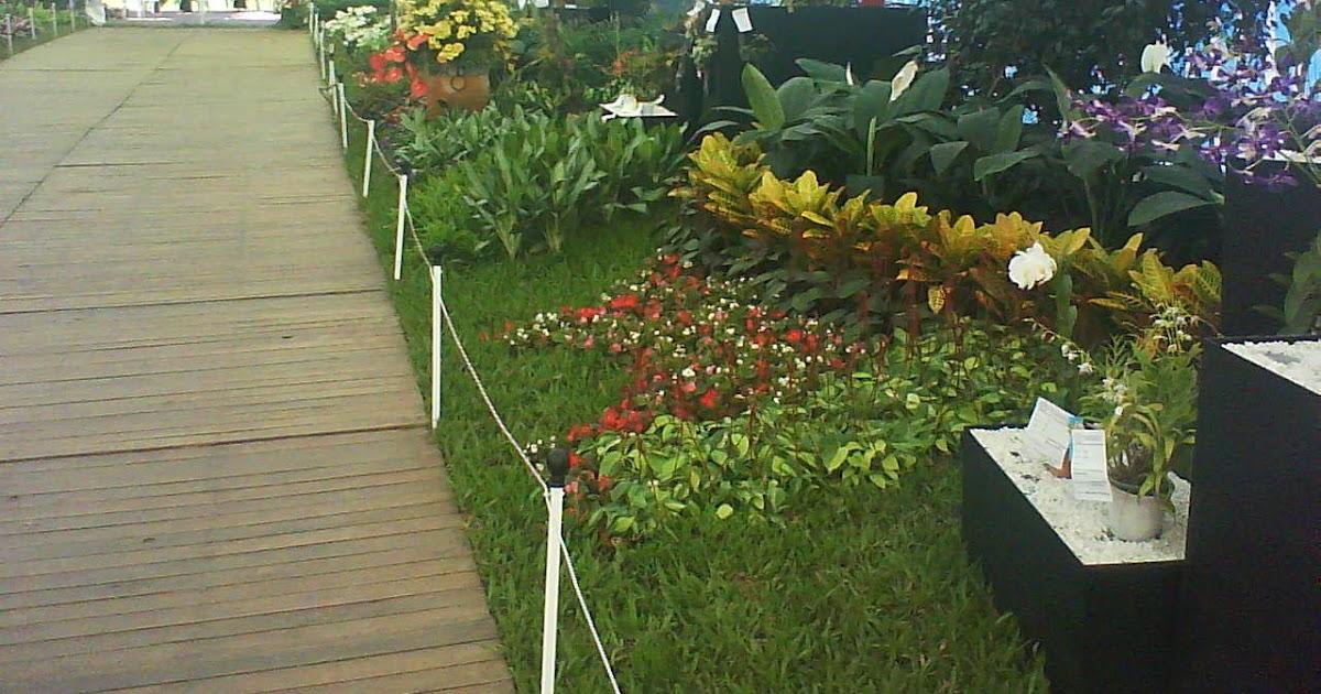 El agronomo valerano como propagar o reproducir tus for Algunas plantas ornamentales