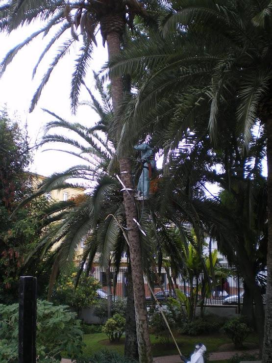 FUMIGACIÓN DE PALMERAS EN EL PORTON DICIEMBRE 2009