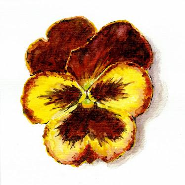 Stedmoder blomst