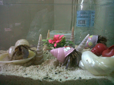 Bloom, the hermit crab, has got company