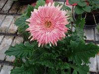 diseno de jardines fotos jardines jardines