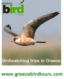 Birdwatching tours in Greece