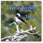 Cyprus Birding