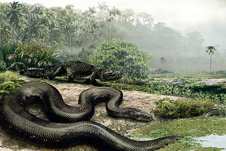 discovered biggest snake in the world the nature animals