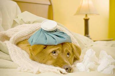 Petco Pet Insurance