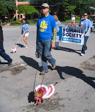 Lewis walks Trixie in Pooch Parade