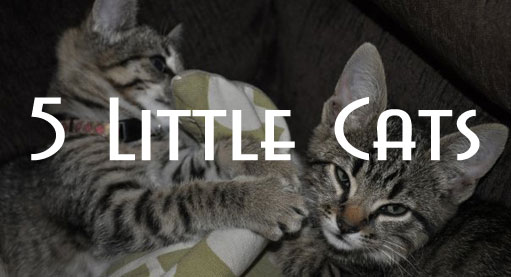 Five Little Cats