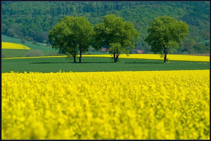 http://1.bp.blogspot.com/_JzC-ZgD8baY/TClpeumLOdI/AAAAAAAAABY/-YoVuMhxIRA/s1600/amarelo%2520e%2520verde%5B1%5D.jpg