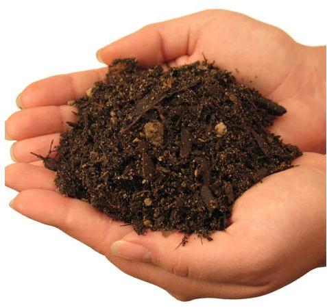 Big myrtle 39 s tea shoppe and egg emporium september 2010 for Soil quality