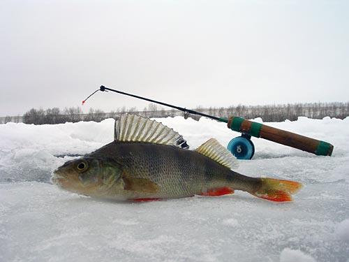 самодельные снасти для рыбалки