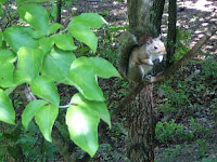 camoflaged squirrel