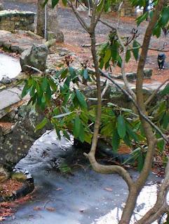 stone bridge at pond