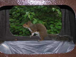 squirrel in trash container